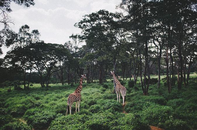 NAIROBI_2011-010 NAIROBI