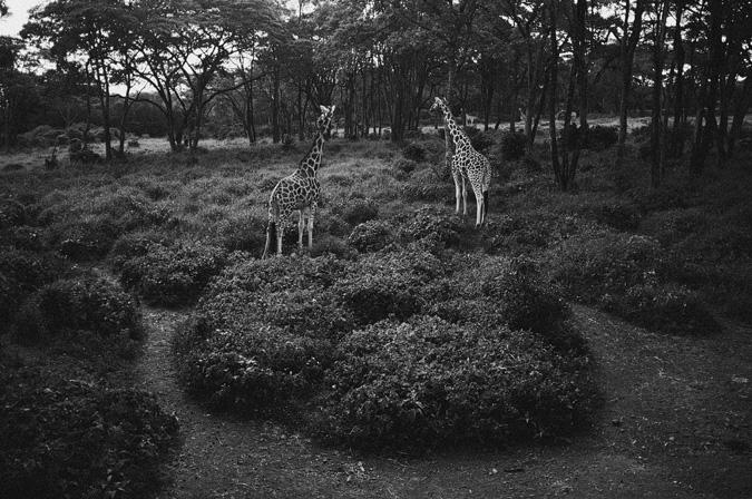NAIROBI_2011-011 NAIROBI