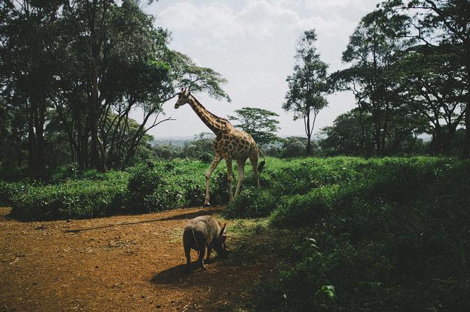 NAIROBI_2011-012 NAIROBI