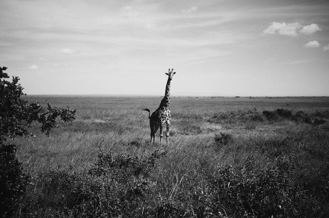 NAIROBI_2011-020 NAIROBI