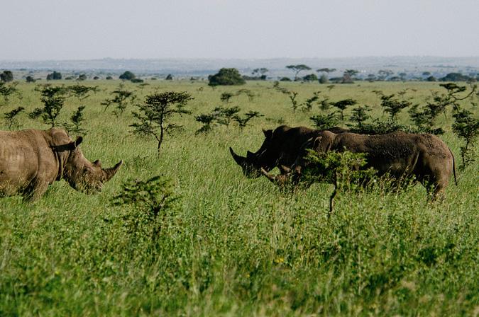 NAIROBI_2011-041 NAIROBI