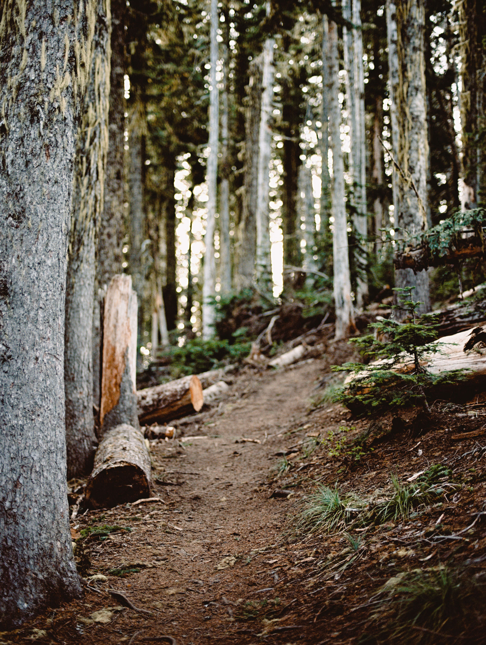 katelynnethan-blog-15 MOUNT RAINIER LOOKOUT ELOPEMENT