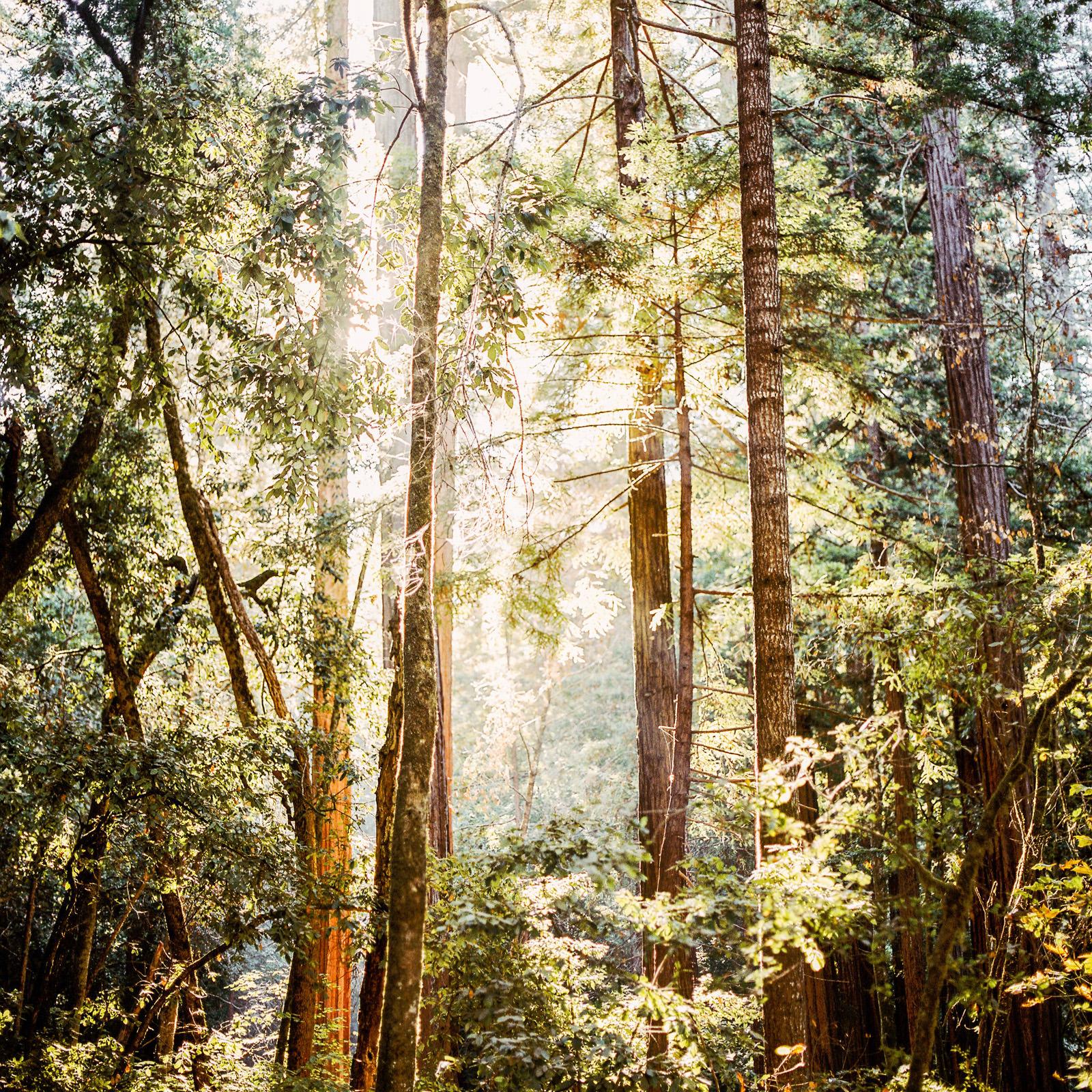 kimclay-blog-001 REDWOOD FOREST WEDDING