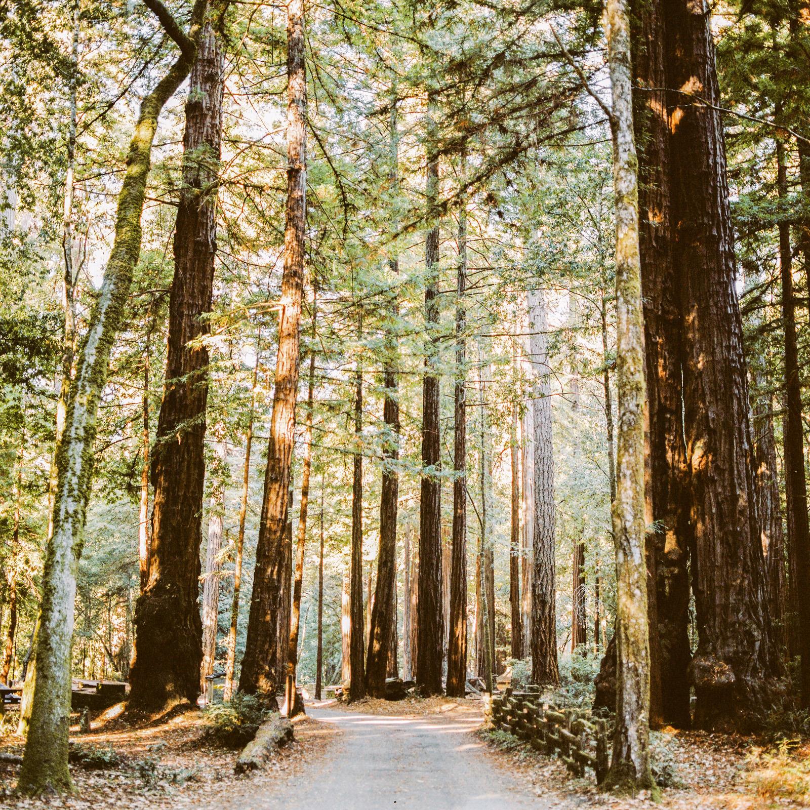 kimclay-blog-015 REDWOOD FOREST WEDDING
